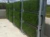 (9) Founex (VD), mai 2012 - Développement de la végétation
