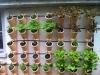 13) Troinex (GE), juillet 2013 - développement de la végétation du VG Garden pilote